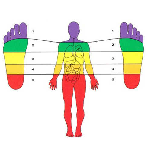 Understanding The Body Using Zone Therapy online training course brighton holistics